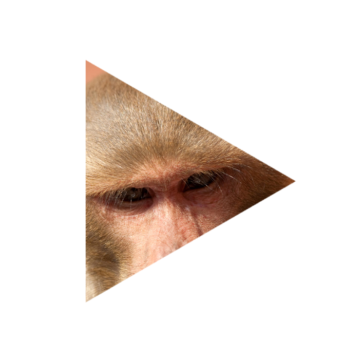 猿にあれを教えると死ぬまでやるからヤバい、ってホントですか?
