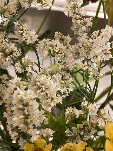 この花の名前をご存知の方はいらっしゃいませんか?