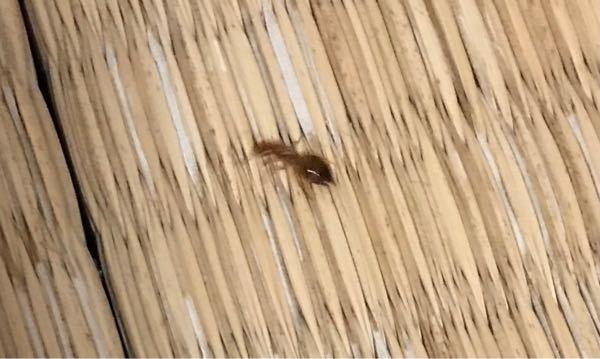 この蟻はなんですか?ヒアリですか?1cm程度でほんのり赤色。おしりに太めの黒の縞模様があります。