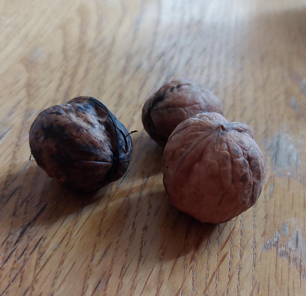 この木の実は何ですか? 子供が拾ってきました。 木はありましたが、その木の下に落ちてはたわけでもなく、うろうろしましたが見当がつきませんでした。
