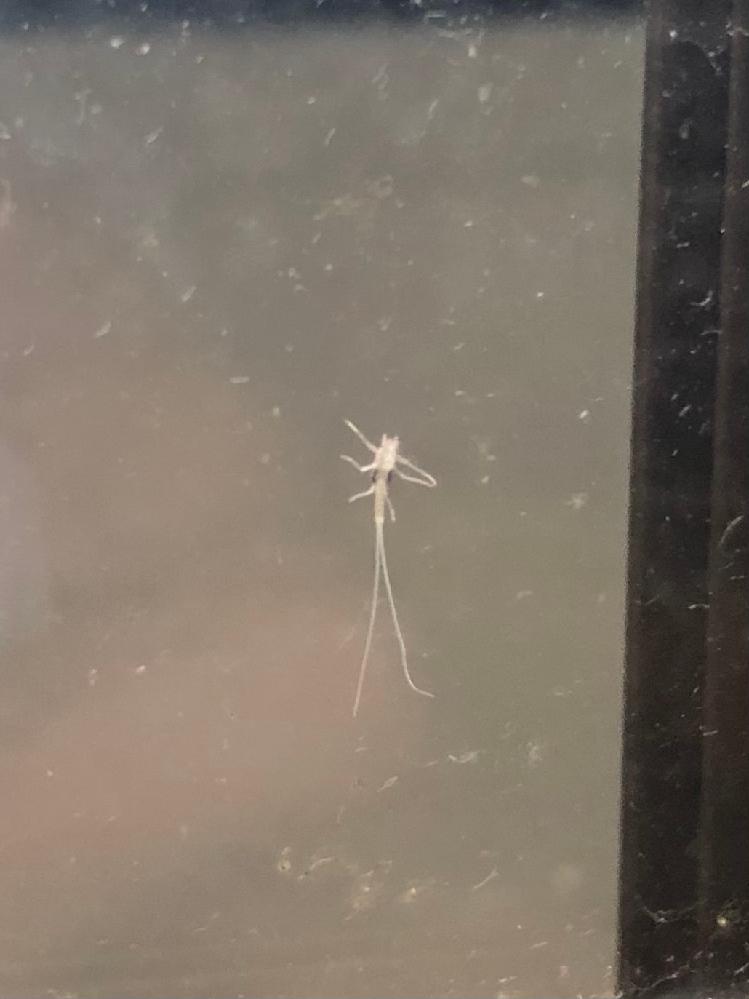 こんばんは。 窓掃除をしていた際このような虫(?) を発見しましたが、なんという名前ですか?