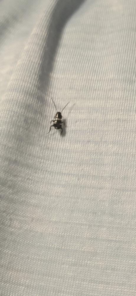 この虫は何ですか? わかる方いましたら教えて下さい!