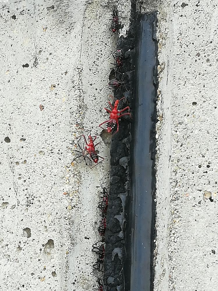 この蜘蛛の名前や毒性を教えて下さい。