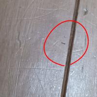 至急!!!家の床に突如小さい尺取り虫 のような虫が大量発生しました! この虫は何なのか、そして退治方法を お願いします!!!!
