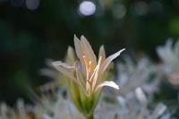 花だけアップにしてしまったので 葉等が分からず、特定出来なくなってしまいました  花だけでも名前が分かったら教えて下さい  宜しくお願いします