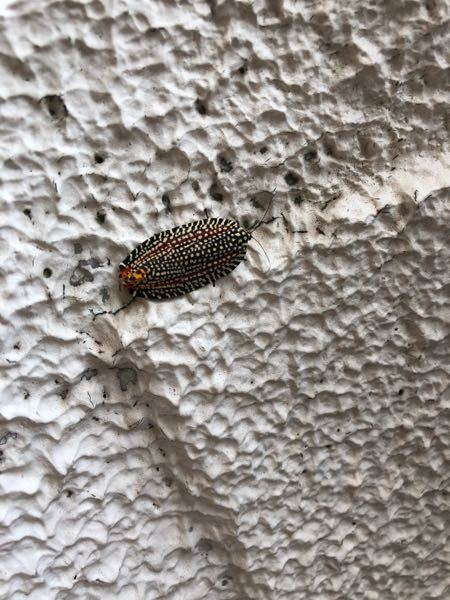 先日、写真の虫と遭遇いたしました、見た目はカメムシのようなフォルムですが飛んでいる姿は蛾のような飛び方でした、色鮮やかで綺麗でした。 こちらの虫の名前を知りたいのですが詳しい方がいらしたらご回答お願いします。 場所は福岡県です。
