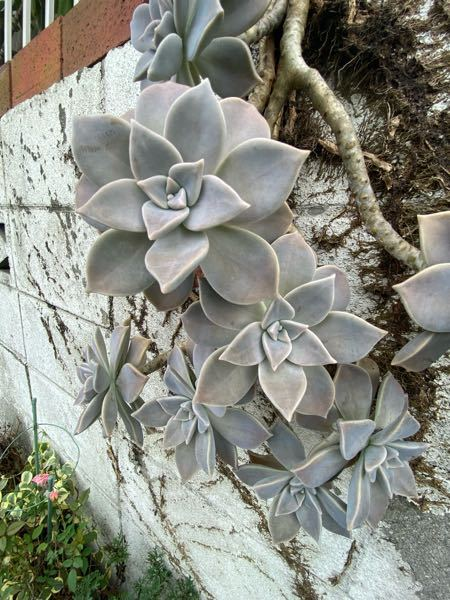 造りものみたいなお花だなーと思ったんですが、なんていうんでしょうか?
