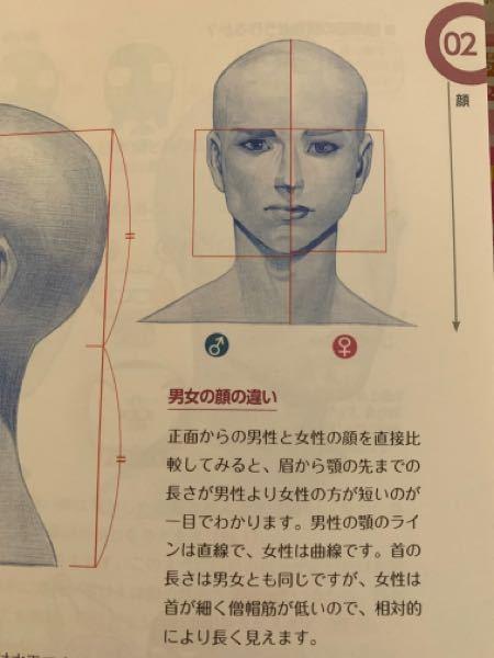 人物画を描くときのコツについて教えてください。 女性の顔は男性に比べて丸みがあり、顎が細っそりしていると参考書に書いてました。 しかし、細っそりした輪郭の描き方がよく分かりません。 どういう風に描けば良いのか、具体的に教えてください。 下記の写真のような説明文がありました。