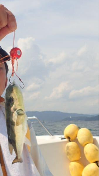 昨日釣りに行きこの魚の名前がわかりません。 教えてください。 お願いします!