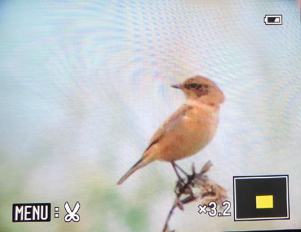 何という鳥ですか? 河原にいました