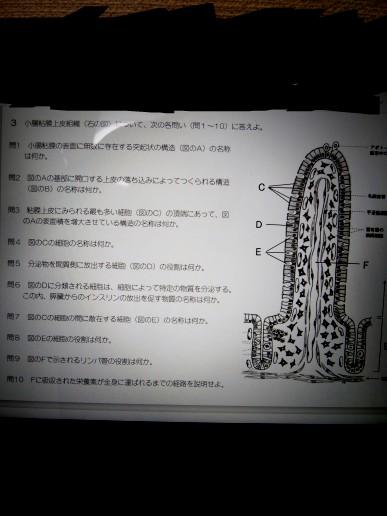 解剖学の問題なのですが… 以下10問をわかる範囲だけでいいので教えてもらえないでしょうか? 宿題とかではないです!