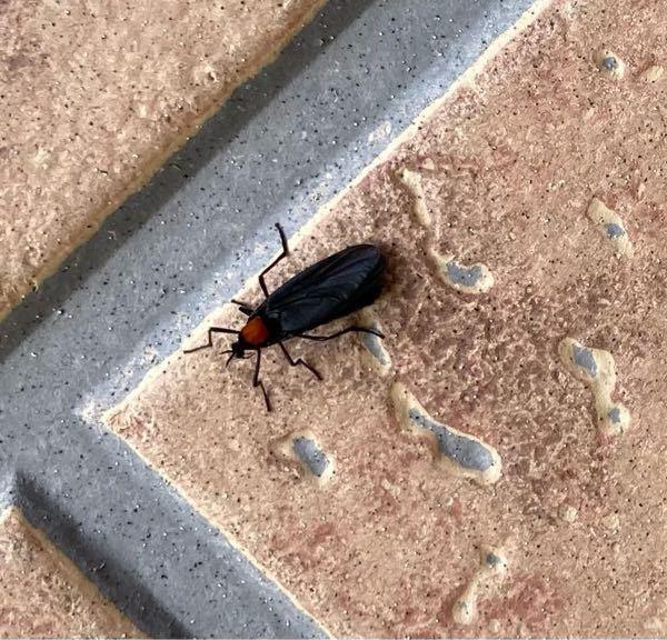 家の外に居たんですけど、この虫なんて名前の虫かわかりますか?