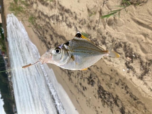この魚は何ですか??