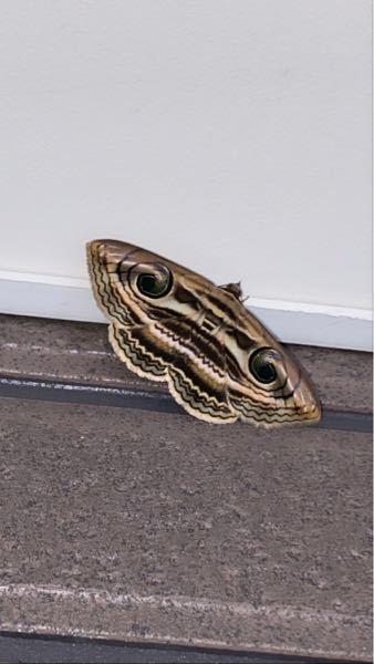この変わった蛾はなんですか?
