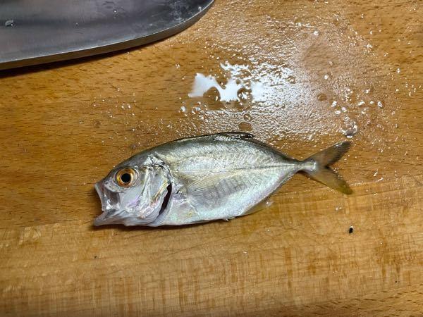この魚の名前わかる方いらっしゃいますか? せいごがあるので、アジでしょうか?