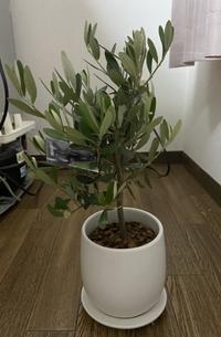 これは何という名の植物ですか?