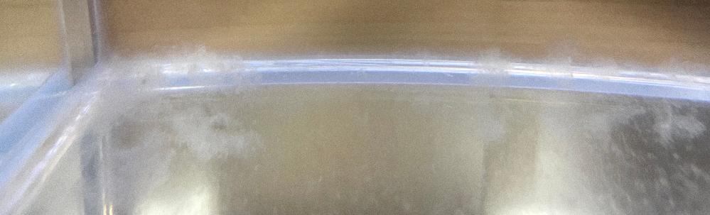 ベタの水槽について。 画像の通り、ベタの水槽の底にいつも白くてモヤモヤしたものが溜まります。 水槽内にはベタのみで装置などは入れてません。 白カビでしょうか?粘膜でしょうか? よろしくお願いします。