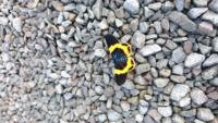 この蝶々は何という種類の蝶々ですか?