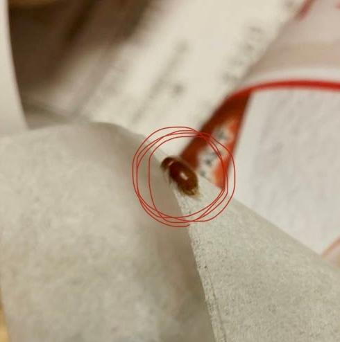 この胡麻粒みたいな大きさの虫が自宅によく出るのですが何ですかね?千葉県に住んでます。