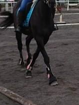 乗馬 前肢がモデル歩きのように交差します。 鞍に関係していることまでは推察できるのですが、具体的にどういう理由が考えられますか?お知恵をお貸しください。 動画を貼り付けられなかったので、分かりにくい画像なのですが、、、 ・常歩の時のみで、速歩、駈歩は異常なし。 ・昨日まで異常なし。 ・プロテクター、ワンコを外しても変化なし。 ・鞍を外すと普通に歩く。鞍をのせた時だけ前肢が交差する。 ・腹帯を緩めても鞍をのせている限り交差する。 ・馬場鞍より障害鞍をのせている時の方が、交差の度合いが軽い。でも交差はする。 ・使用している鞍は以前からずっと使っているもの。