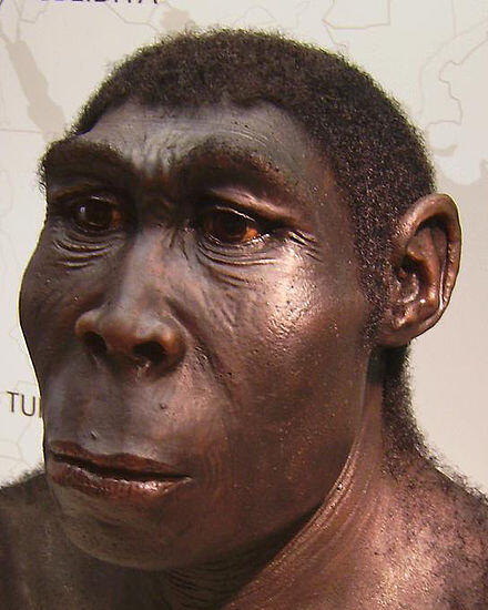 チンパンジーと人間で性交をしても子供は生まれないそうです。 しかし人類の祖先であるホモ・エレクトス♂と現代の人間♀が 性交した場合は妊娠はするのでしょうか? 妊娠可能な場合、子供はどちらに似やすいのかも気になります。