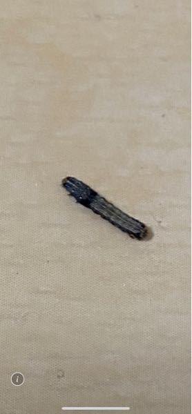 アパートの部屋に数十匹の幼虫が大量発生しました この虫はなんでしょうか