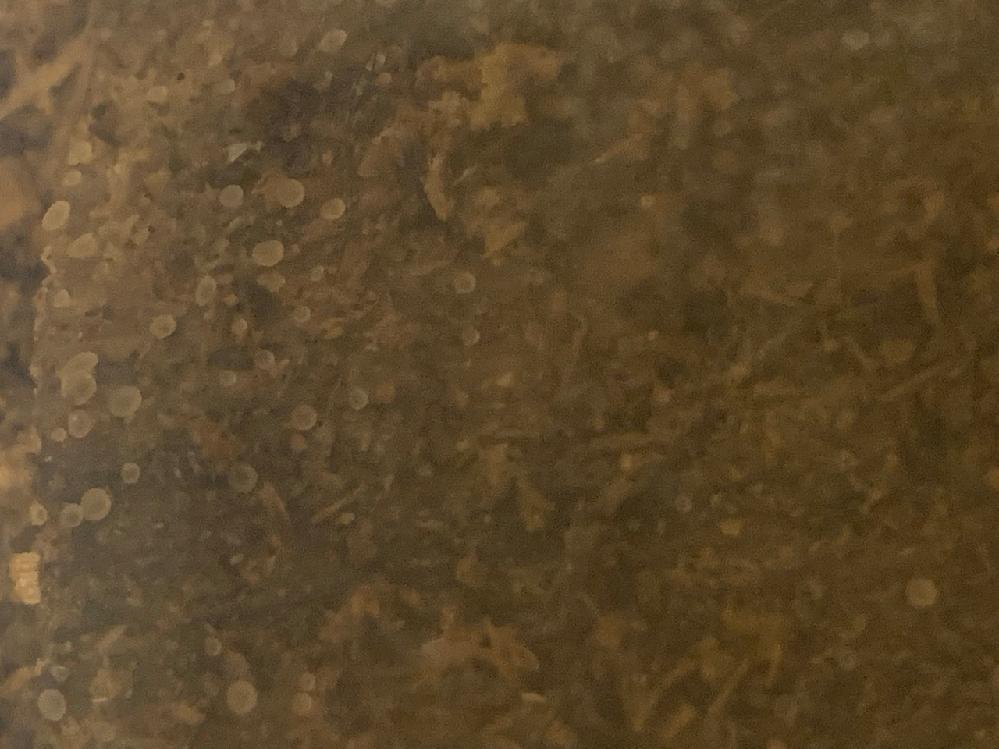 クワガタの飼育についてになります。 コクワガタを数匹入れていたケースがあり、数匹の幼虫を発見したので、成虫を別のケースに移し幼虫を育てています。 そしてケースの中に入れてあった朽木の表面に、白い小さい粒の様なものが沢山付着している事に気付きました。 これはクワガタの卵ですか? 何か別のものでしょうか? 詳しい方、宜しくお願いします。