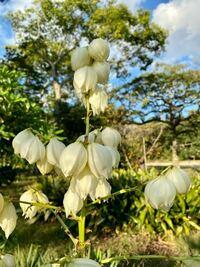 この植物の名前を教えて下さい。 よろしくお願いいたします。