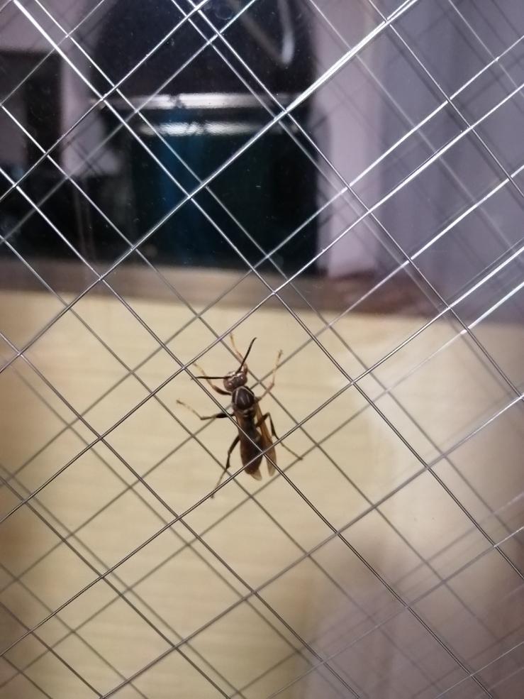 この虫ってなんですか?