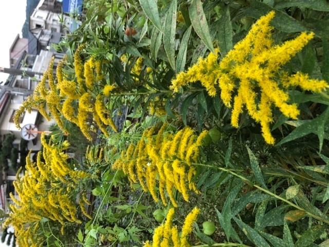 この植物は何ですか?