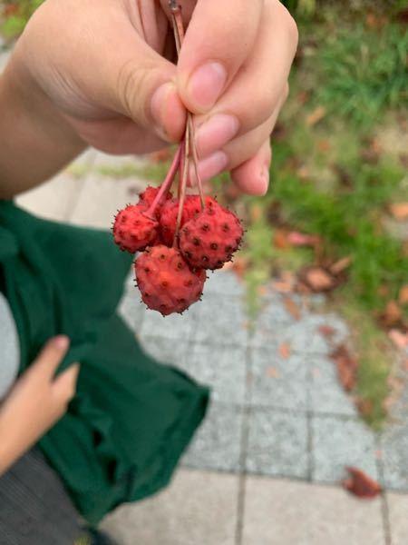 この木の実はなんでしょうか? 樹木の下に落ちてました