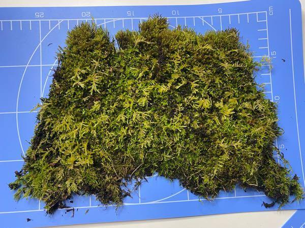 この苔の名前を教えてください。 よろしくお願いします。 何種類か混ざっているようにも見えますが。。