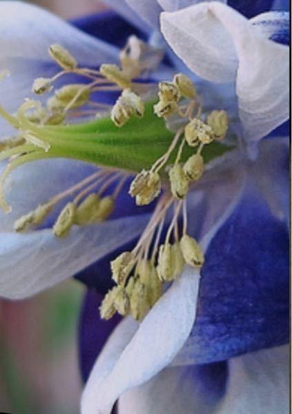 この花の名前教えてください。 見にくい写真でごめんなさい