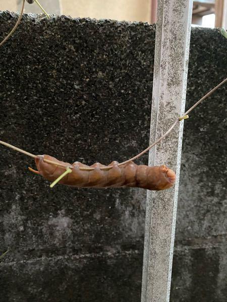落ち葉が家の周りに溜まっていたので掃除していたら見つけました。これは、何かの幼虫でしょうか?