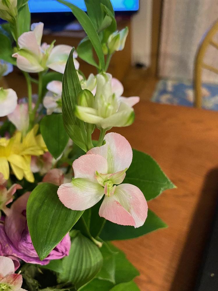 この花はなんですか?初めて見ます