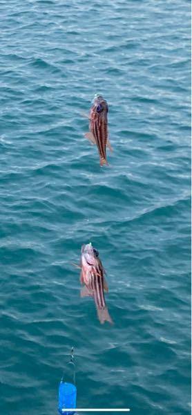 沖縄で釣れたんですけどこの魚の名前わかる方いますか?お願いします