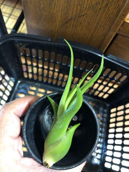 植物の名前教えてください。