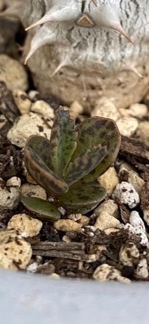 この植物の名前わかりますか? 多肉植物だと思うのですが… わかる方いれば教えてください!!