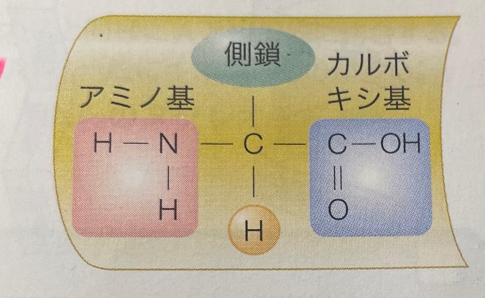 なぜカルボキシ基のCとOだけ二重線でつながれているのでしょうか?なにか意味があるのですか?? またなぜタンパク質を構成する原子が全てマイナスなのか知りたいです(><)