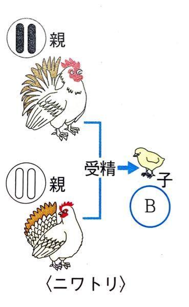 中3理科 生殖と染色体 下の図のBに当てはまる染色体をかきなさいという問題で、解答用紙には●〇とかかれていたのですが、〇●とかいても正解になりますか?