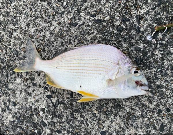 この魚はなんという魚でしょうか