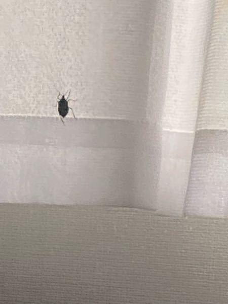 ゴキブリかと思ったんですけど、この虫なんですか?