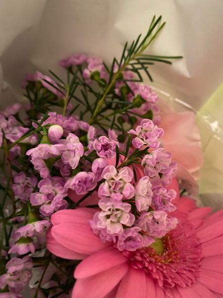 ピンクの小さな花の名前分かりますか?