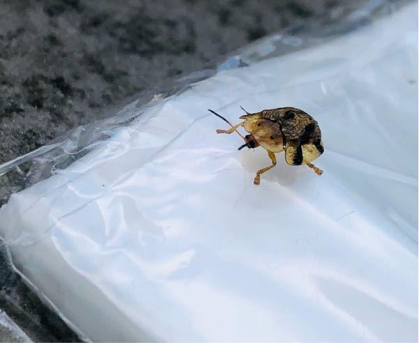 この虫はなんて虫ですか?