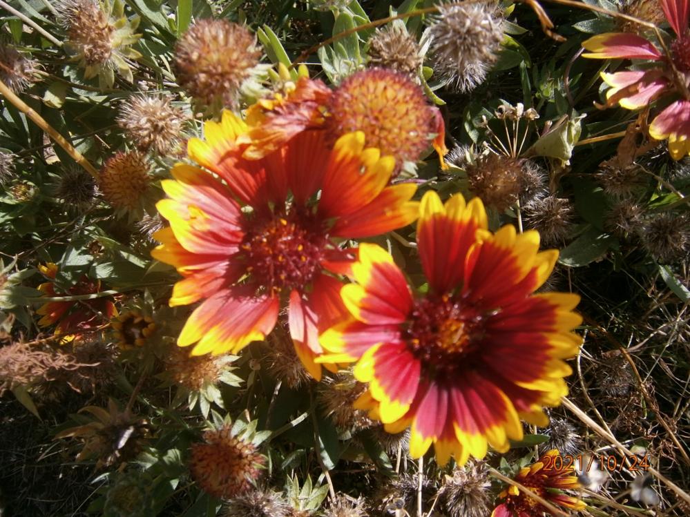 写真の花の名前を教えてください