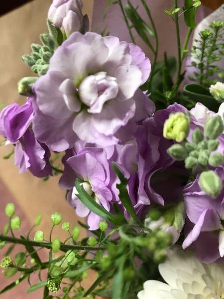 この花の名前を教えて下さいよろしくお願いします