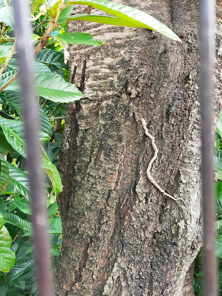 この蛇はなんですか?愛知県市街地です。