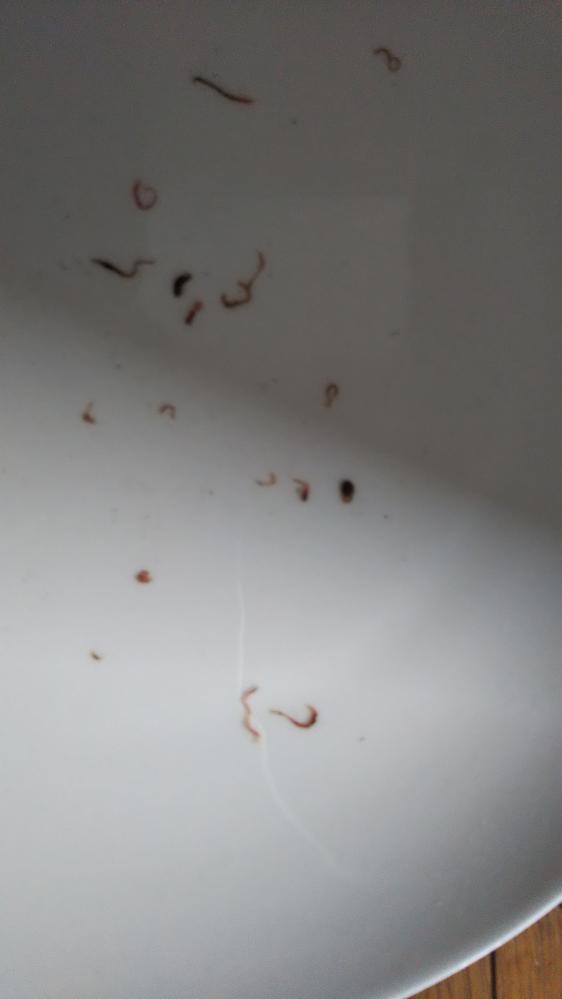 虫の幼虫でしょうか。 何という虫か教えてください。