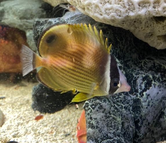 この魚の名前を教えて下さい。