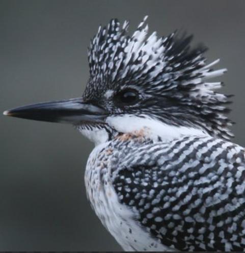 新婚さんいらっしゃいの「山瀬まみ」と鳥の「ヤマセミ」は、音のイメージが似ていますが関係が有るのですか。